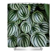 Watermelon Leaves 2 Shower Curtain