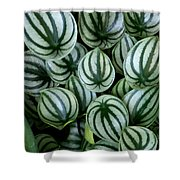 Watermelon Leaves Shower Curtain