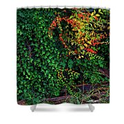 Watershed Park Foliage Shower Curtain