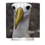 Waved Albatross Portrait Shower Curtain