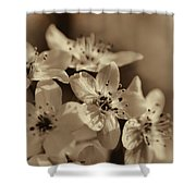 Waves Of Light In Sepia Shower Curtain