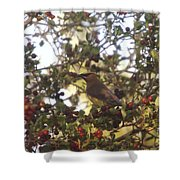 Wax Wing In A Berry Tree  Shower Curtain
