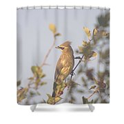Wax Wing In Sunshine  Shower Curtain