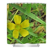 Way Down In The Grass Shower Curtain