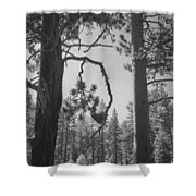 We Two Shower Curtain by Laurie Search