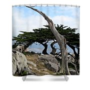 Weathered Tree On California Coast Shower Curtain