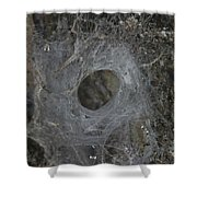 Web Of A Funnel-web Spider Shower Curtain