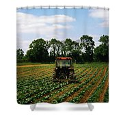 Weeding A Cabbage Field, Ireland Shower Curtain