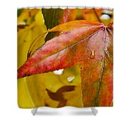 Weeping Red Leaf Shower Curtain