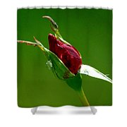 Weeping Rose Bud Shower Curtain