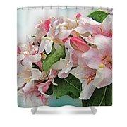 Wegia Shower Curtain