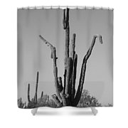 Weird Giant Saguaro Cactus In Black And White Shower Curtain