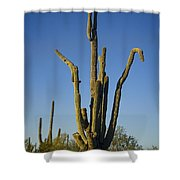Weird Giant Saguaro Cactus With Blue Sky Shower Curtain