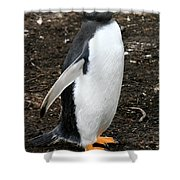Welcome From A Gentoo Penguin Shower Curtain