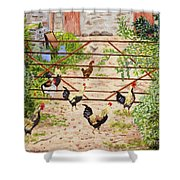 Welsh Farm Cockerels On Patrol Shower Curtain