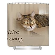 We're Moving Notification Greeting Card - Lily The Cat Shower Curtain