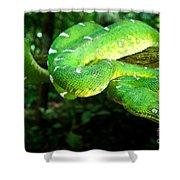 West Amazonian Emerald Tree Boa Shower Curtain