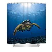 West Maui Sea Turtle Shower Curtain