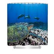 West Maui Sea Turtles Shower Curtain