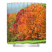 West Virginia Maples 2 Shower Curtain