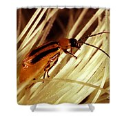 Western Corn Rootworm Beetle Shower Curtain