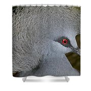 Western Crowned-pigeon Goura Cristata Shower Curtain