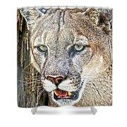 Western Mountain Lion Shower Curtain