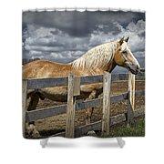 Western Palomino Horse In Alberta Canada No.1335 Shower Curtain