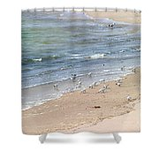 Western Sandpiper Shower Curtain