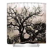 Western Winter Tree Shower Curtain