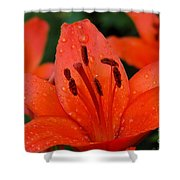 Wet On Red Shower Curtain