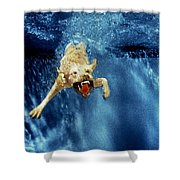 Wet Paws Shower Curtain by Jill Reger