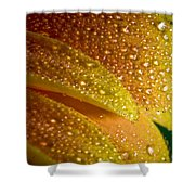 Wet Pettals Shower Curtain