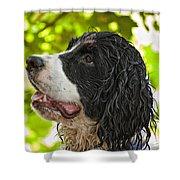 Wet Puppy 2 Shower Curtain