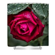 Wet Weather Rose Shower Curtain