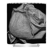 Wet White Rose Shower Curtain