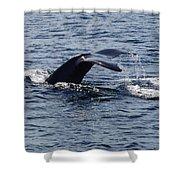 Whale Dive Shower Curtain