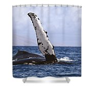 Whale Fin Above Water Shower Curtain