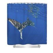 Whale Shark Tail Near Surface With Sun Shower Curtain