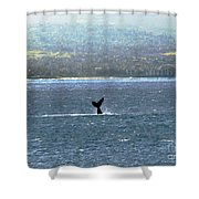 Whale Tail I Shower Curtain