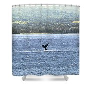 Whale Tail II Shower Curtain