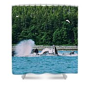 Whales Bubble Net Feeding Shower Curtain