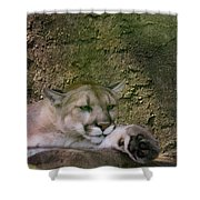 What A Paw Shower Curtain