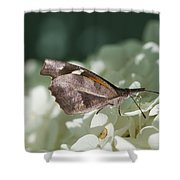 What A Schnoz On That American Snout Butterfly Shower Curtain
