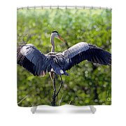 What A Wingspan Shower Curtain