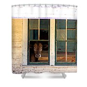 What Is For Dinner? Shower Curtain