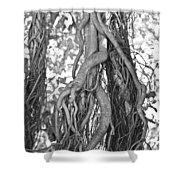 What Trees Know Shower Curtain