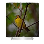 What Warblers Do Shower Curtain