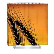 Wheat At Sunset Shower Curtain