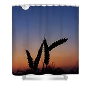 Wheat, Harvest Moon Shower Curtain